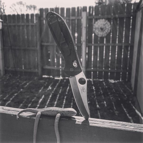 Benchmade - The Griptilian and Reptilian. For the longest time, we've had this lizard toy hanging on our deck... no clue why. 😂 • #whatsinyourpocket #whatsyouredc...